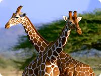 小学生の子供達に動物園のキリンを見せ、どんな事を感じたかと聞いたら、何と答えるか